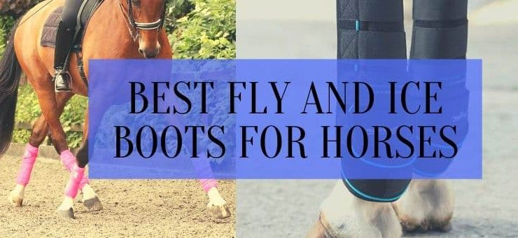 best fly boots for horses