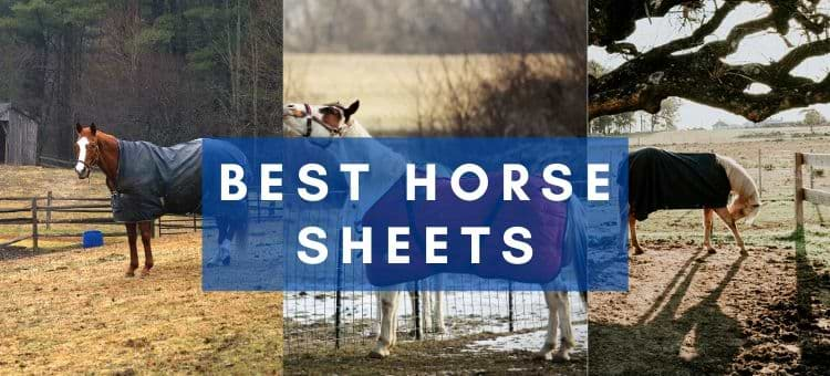 Best horse Sheets for fly ,waterproof and winter blankets reviews 2021