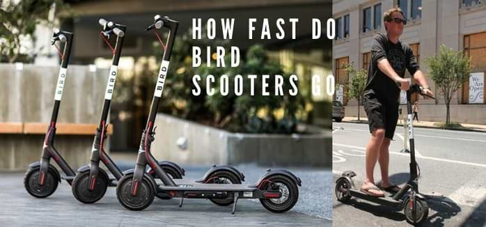How fast do bird scooters go