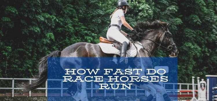How fast do racehorses run- Know 5 fastest racehorse in the world