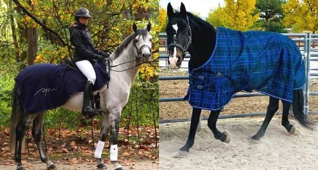 Best fly sheets for horses