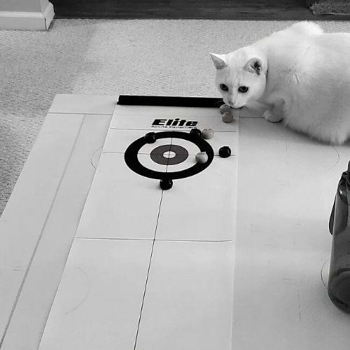 tabletop curling
